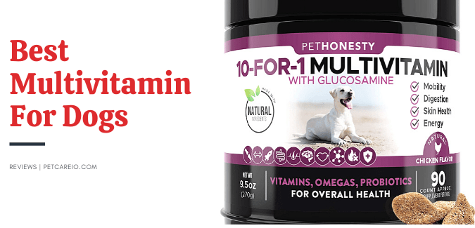best multivitamin for dogs