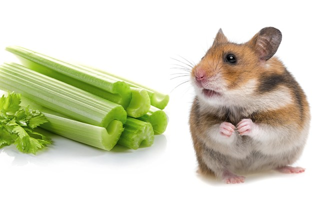 Can Hamsters Eat Celery