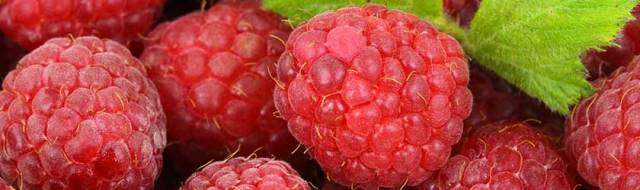 Can Hamsters Eat Raspberries