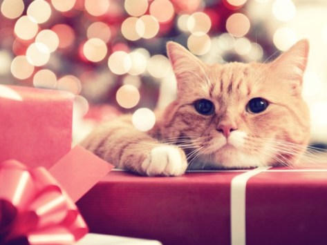 12 Holiday Gifts for Pets to Surprise Your Four-Legged Friends With