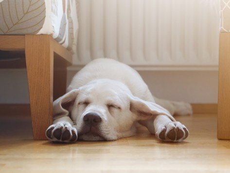 4 Sleep Disorders in Dogs