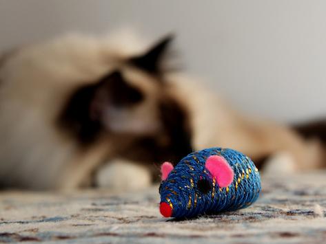 5 Alternatives to Catnip