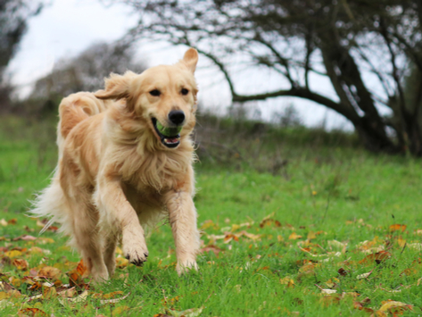 5 Signs Your Dog Is Getting Too Much Exercise