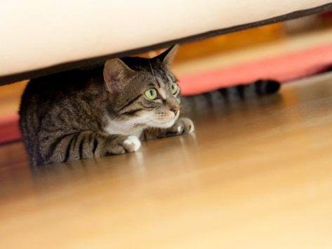 5 Things That Stress Out Your Cat