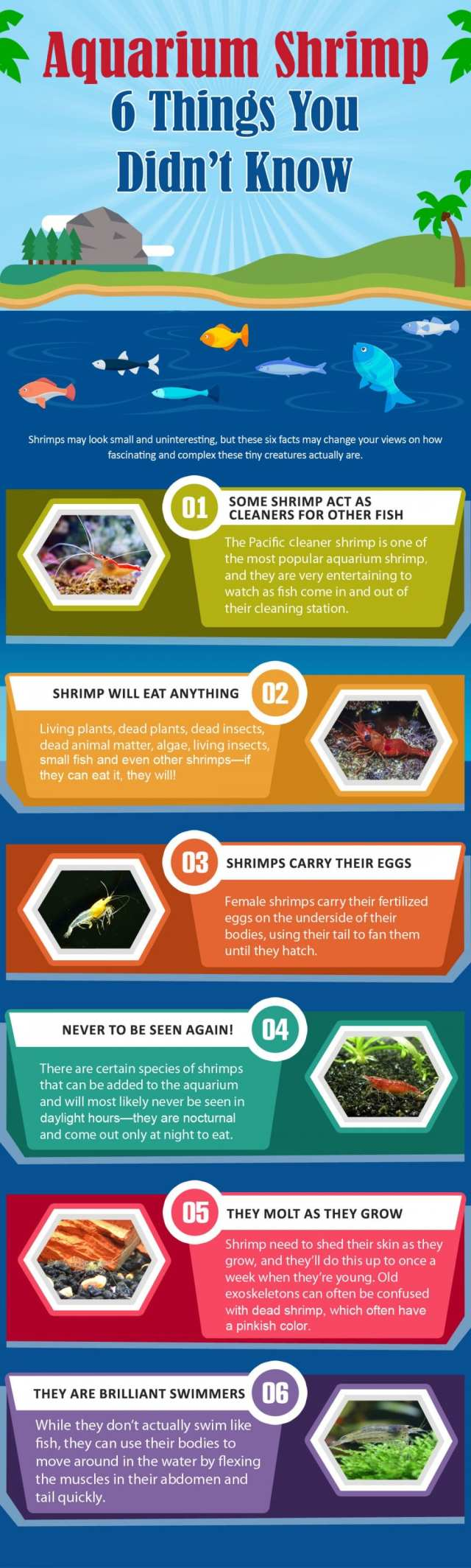 6 Things You Didn't Know About Aquarium Shrimp