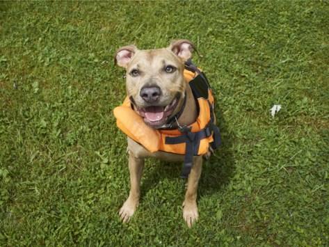 Buddy System: How to Teach Your Dog to Swim