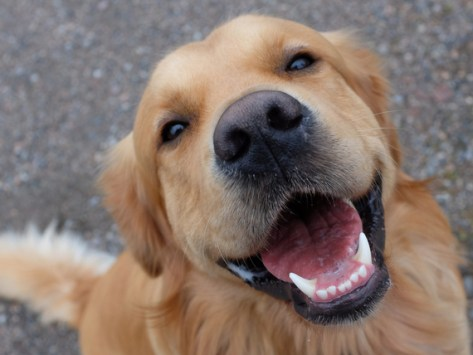 Do Dogs Smile? The Science Behind the Looks We Get From a Happy Dog