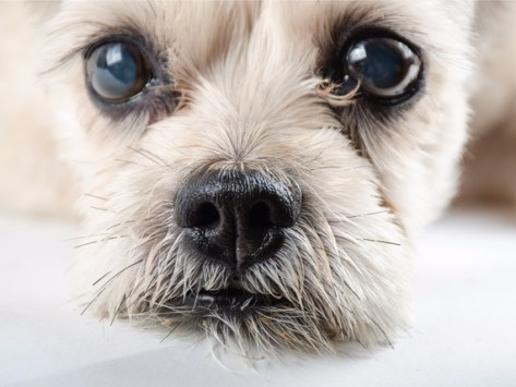 Dog Staring: Everything You Want to Know