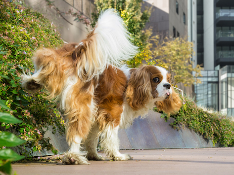 Everything You Need to Know About Leg Lifting in Dogs