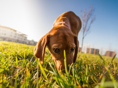 How Do Dogs Find Their Way Home?