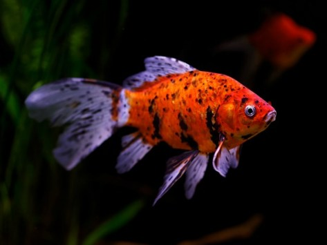 How a Fish's Immune System Works