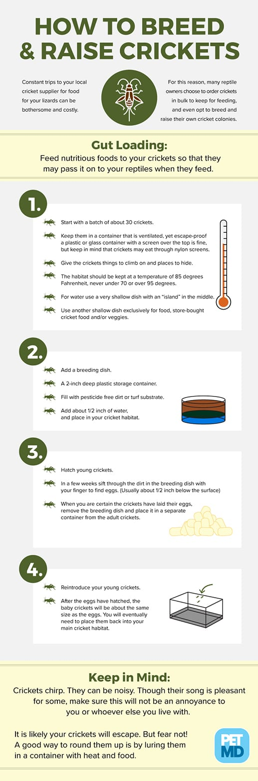 How to Breed & Raise Crickets
