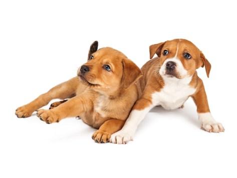 How to Calm Down an Anxious Dog
