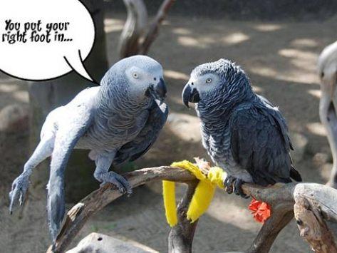 How to Teach an Old Bird New 'Tricks'