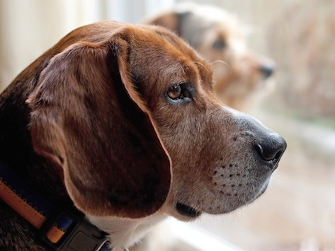 Nature and Nurture: Why Your Dog's Separation Anxiety Is Not Your Fault