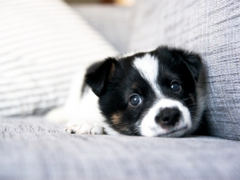 Puppy Crying: Why it Happens and How to Help