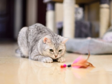 These Are the Best Cat Toys to Simulate Hunting Prey