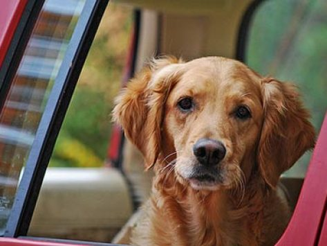 Top 10 Pet Travel Tips