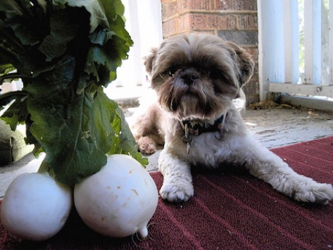 What is a Natural Pet Food, Really?