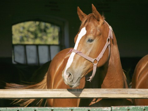 What to Expect Before Getting Your First Horse