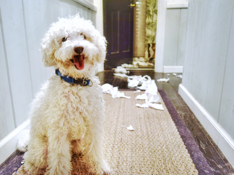 Why Do Dogs Shred Paper Products?