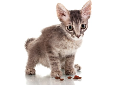 A Schedule for Feeding Your Kitten – A Healthy Diet for Growing