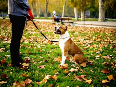 4 Critical Dog Training Cues That Could Save Your Dog's Life