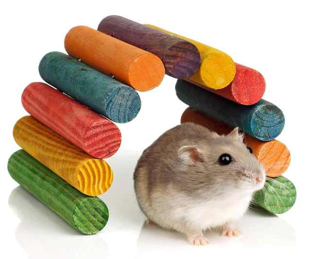 Dwarf hamster chew toys - Hamster Chew Toys - How to select right toys for your hamster?
