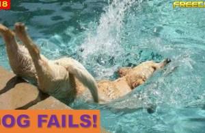 Funniest Dog Fail Compilation 2018 PT1