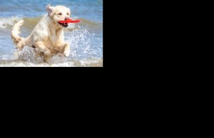 Dog Show | Cute DOG Videos | Funny Animals Video 2019 #4
