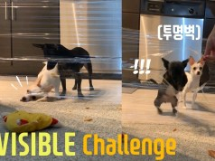 DOGS Reaction to the Invisible challenge | Funny dog video