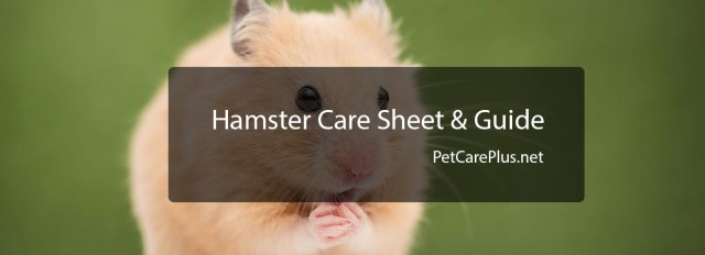 Hamster care guide - How to take care of hamsters ?
