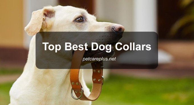 Top Dog Collars 2020