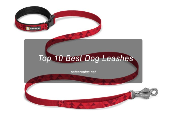 Top 10 Best Dog Leashes