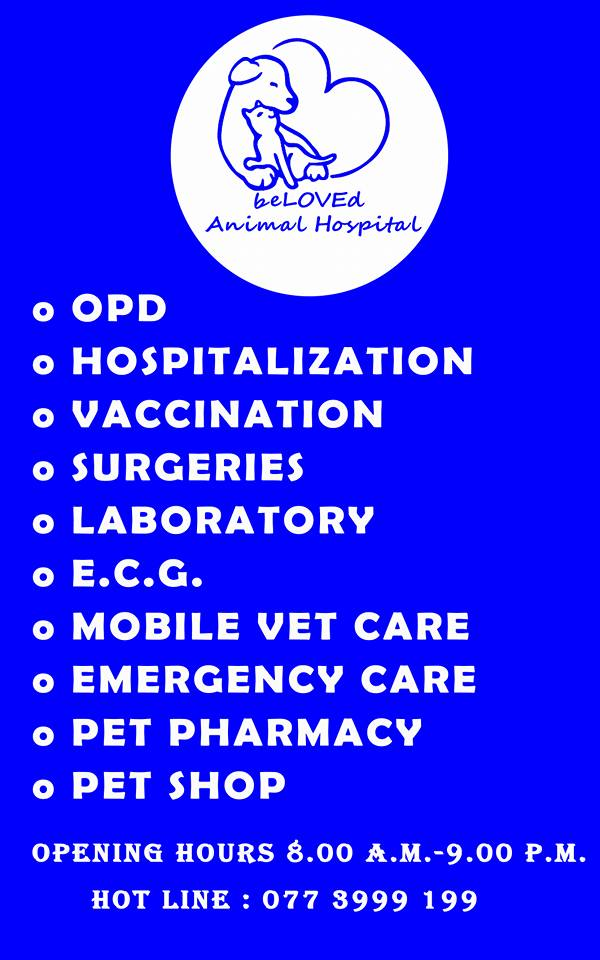 Beloved Animal Hospital3.jpg