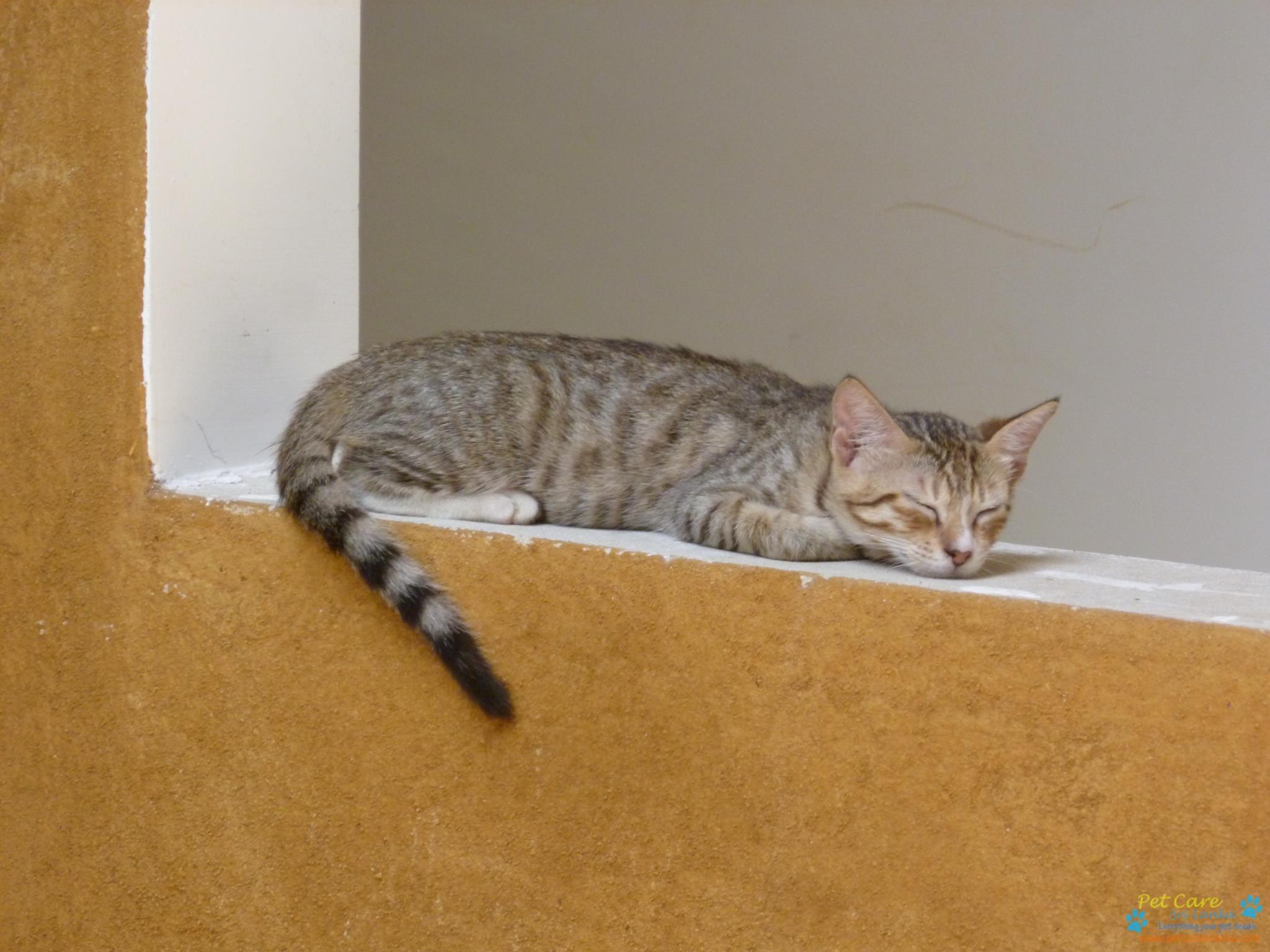 Cat Protection Trust Sri Lanka3.jpg