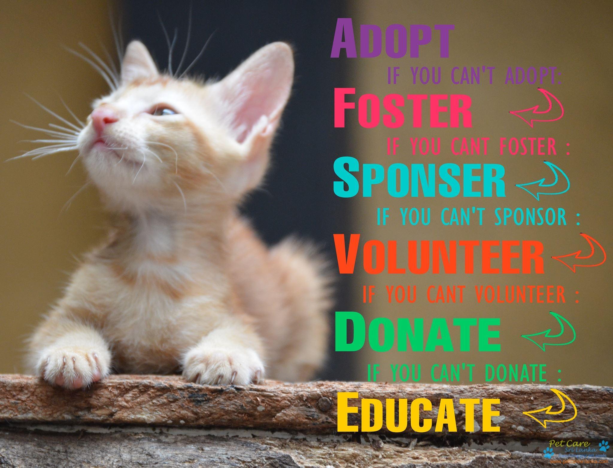 Cat Protection Trust Sri Lanka4.jpg