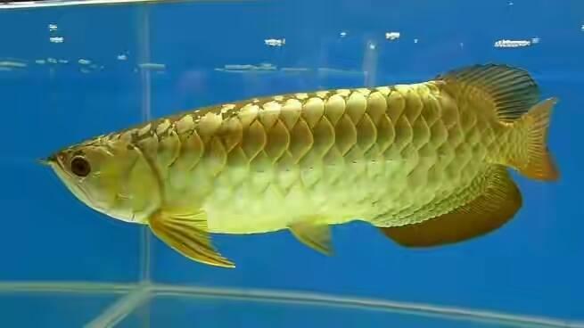 Indusiri aquarium3.jpg