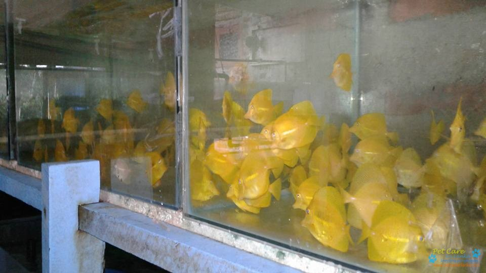 Rishon Aquarium2.jpg