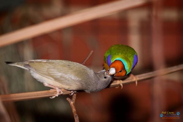 S.M.A Bird Farm .jpg