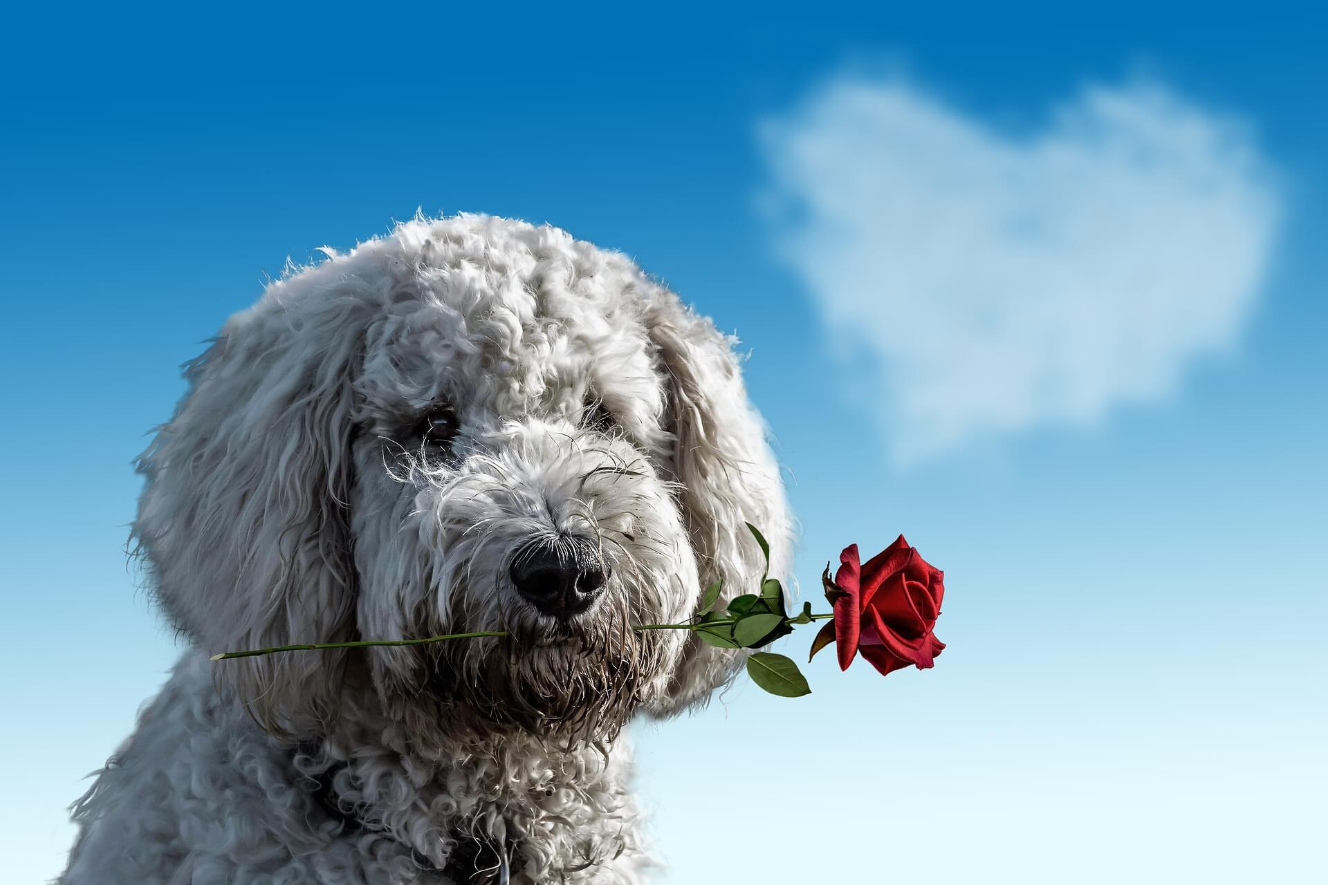foto How to Make a Dog Love You