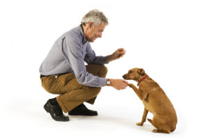 Dog Training sit