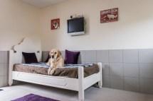 Luxury Dog Boarding Kennels