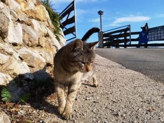 ตอนเดินออกมาจากที่พักเจอแมวด้วย