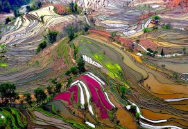 Campos de arroz, China - Foto: Thierry Bornier