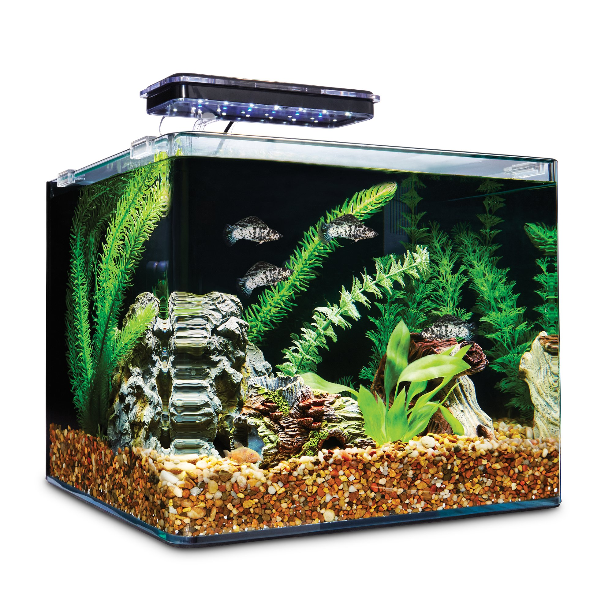 Aquarium Plants Sale Online