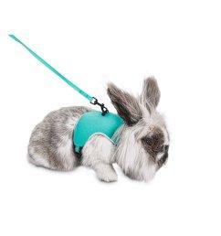 you me aqua small animal harness and leash set petco rh petco com bunny harness petco bunny harness petco [ 2000 x 2000 Pixel ]