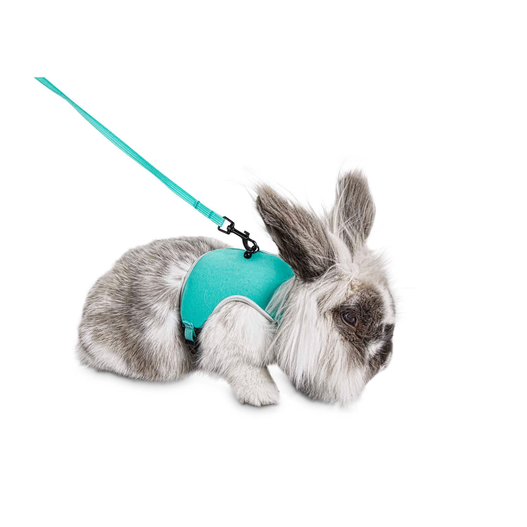 hight resolution of you me aqua small animal harness and leash set petco rh petco com bunny harness petco bunny harness petco