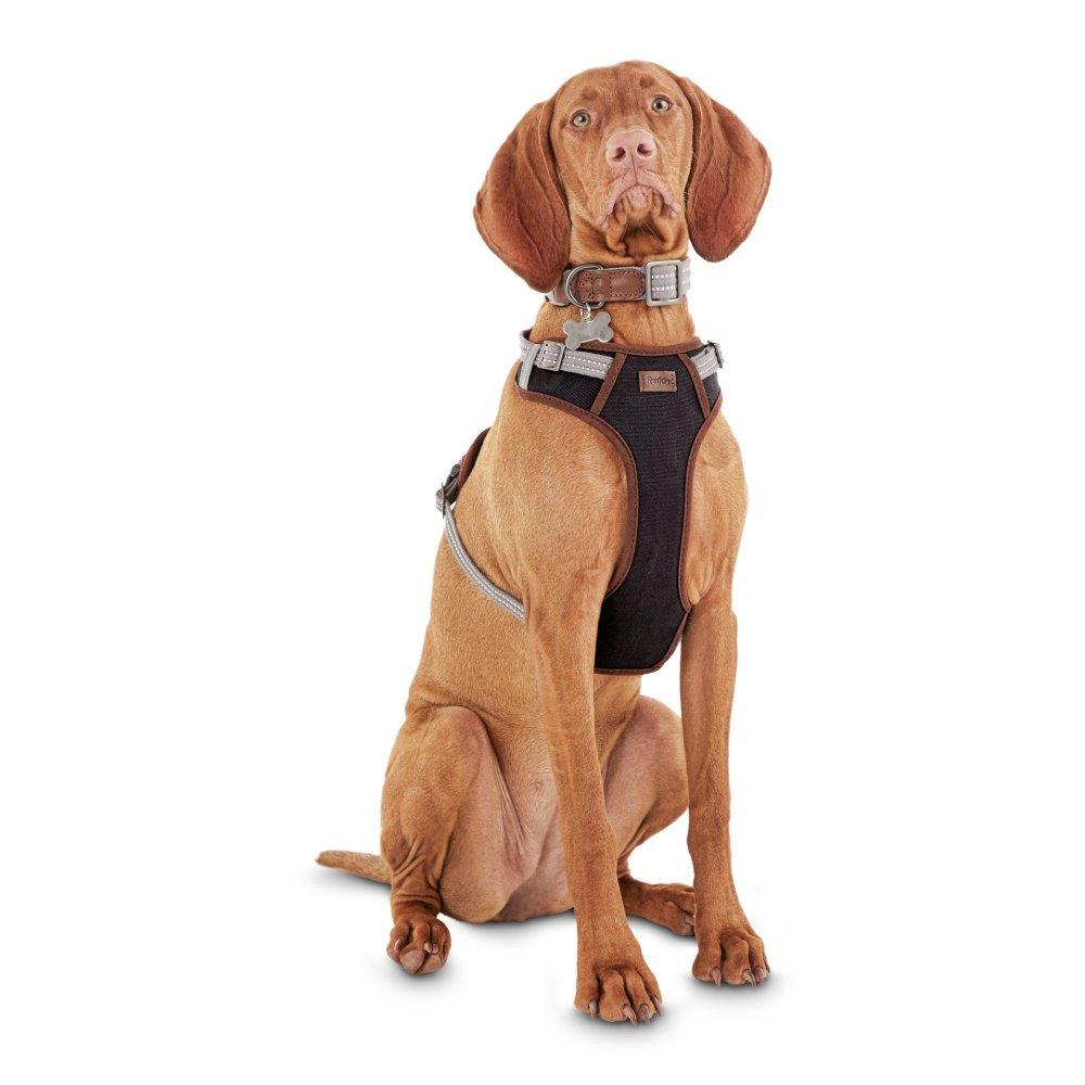 medium resolution of dog harnes