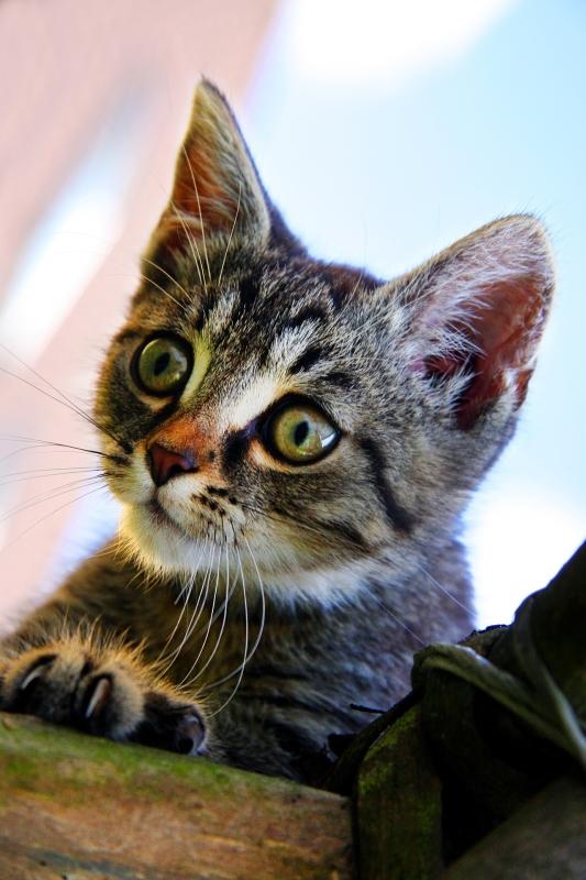 cat-1527911_1920